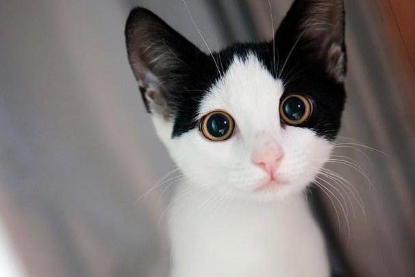 Absolutely Adorable Kitten Photos Too Cute Animal Planet