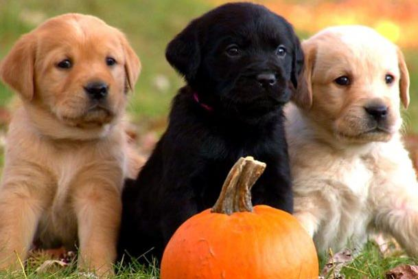 absolutely adorable puppy photos too cute animal planet