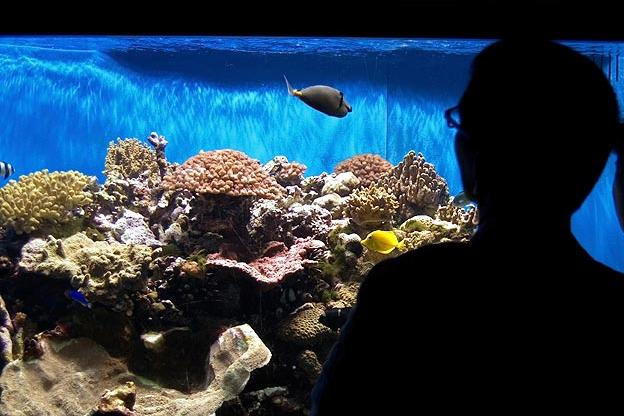 Top 10 aquarium fish for every budget tanked animal planet for Expensive fish to eat