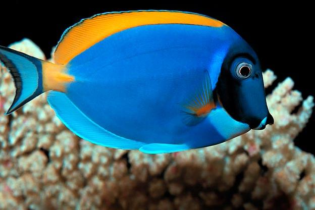 top 10 aquarium fish for every budget tanked animal pla