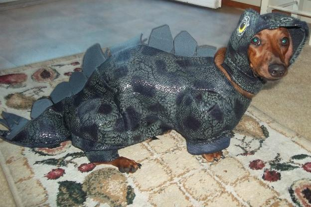 This is Snickers AKA u0027SnickerSaurusu0027 in his Halloween costume. He is a & Adorable Pets in Halloween Costumes | Animal Planet
