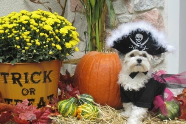 Adorable Pets in Halloween Costumes | Animal Planet