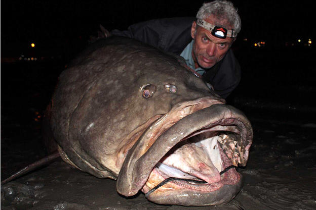 Jeremy Wade With A Gigantic Queensland Grouper The Largest Fish Hed Ever Caught