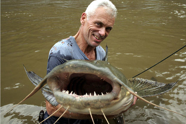 Image result for goonch catfish