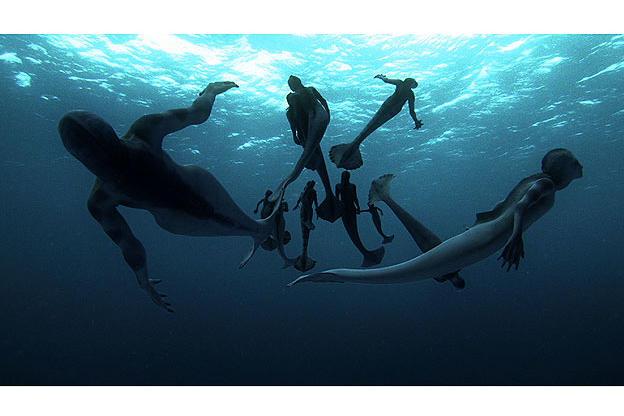 the pod swims along in the open ocean