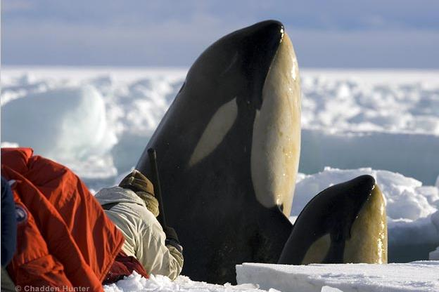 Filming killer whales close up in Antarctica's Ross Sea.
