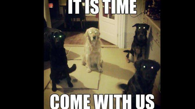 meme-paranormal-dog-barktivity-2.jpg