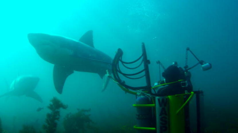 Giant Sharks Circle One-Man Shark Cage