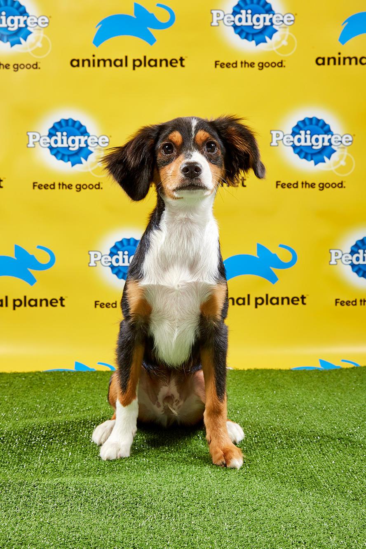 Puppy Bowl Xv Starting Lineup Puppy Bowl Animal Planet