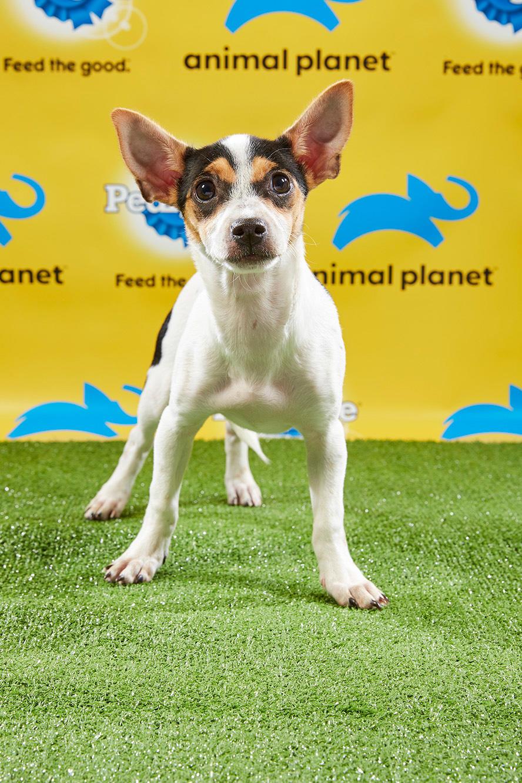 Puppy Bowl XV Starting Lineup | Puppy Bowl | Animal Planet