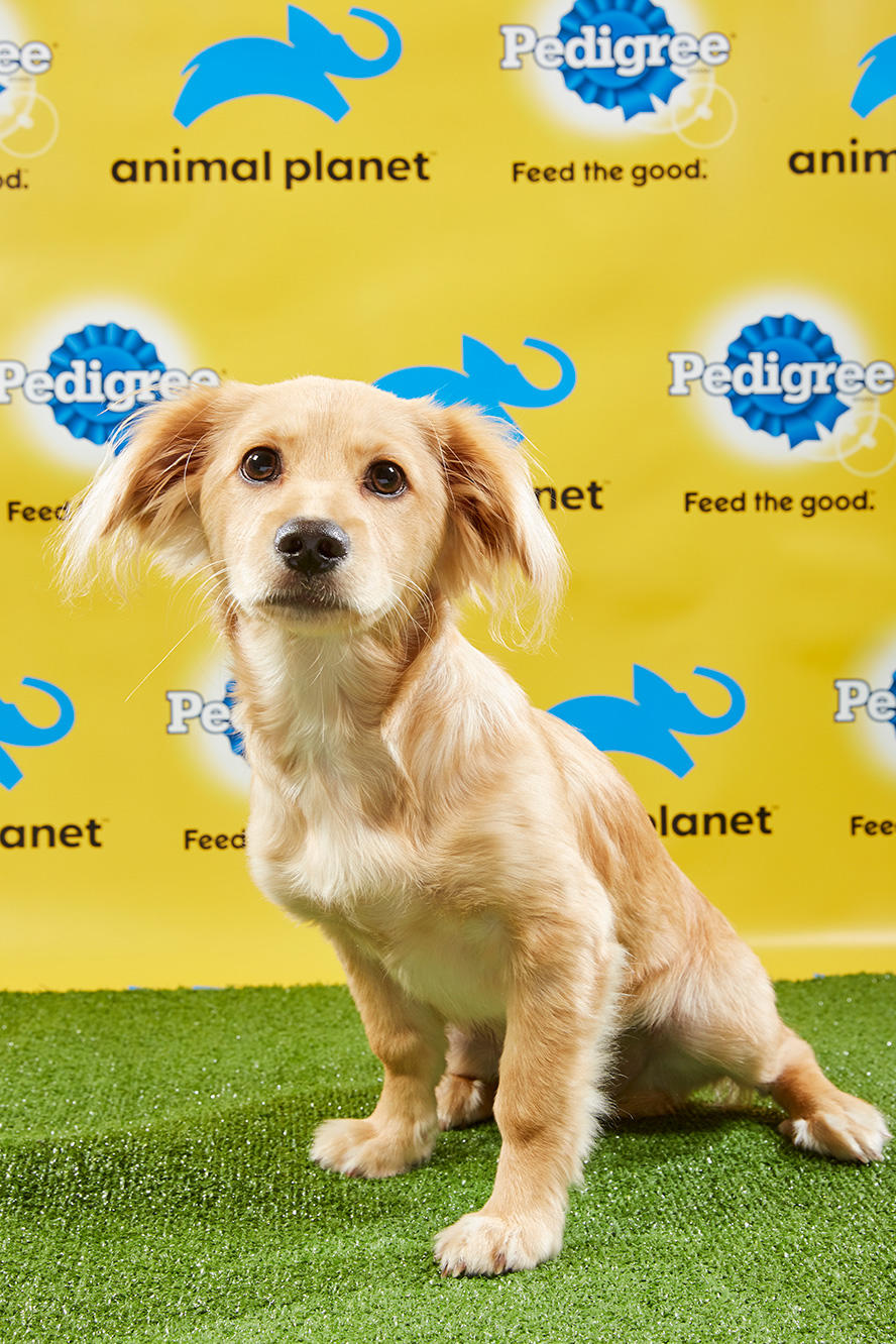 Puppy Bowl XV Starting Lineup | Puppy Bowl | Animal Planet