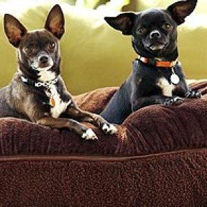 pets & animal care