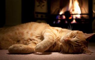 5 Most Dangerous Cat Diseases Animal Planet