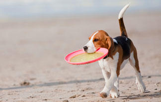 Image result for dogs on beach