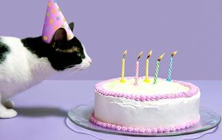 Cat Birthday Party Ideas Summer Happy Everything | Animal Planet
