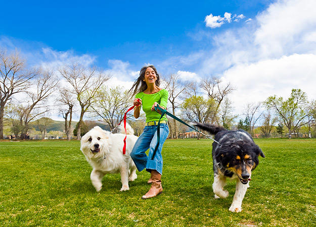 10 Fun Ways to Exercise Your Dog   Healthy Pets   Animal Planet