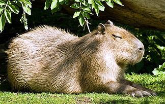 Top 10 Peculiar Pets Animal Planet