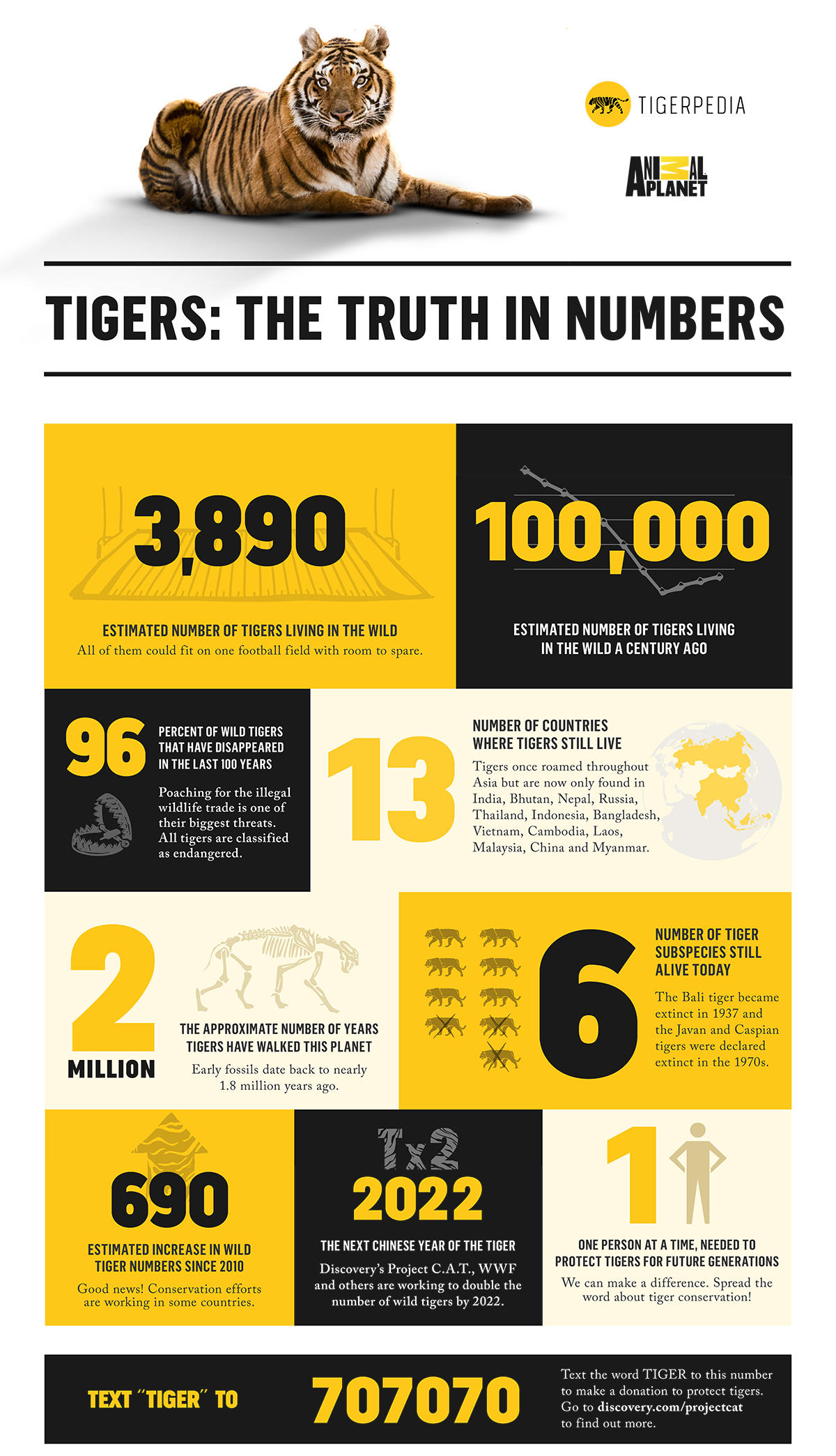 Tigers By The Numbers